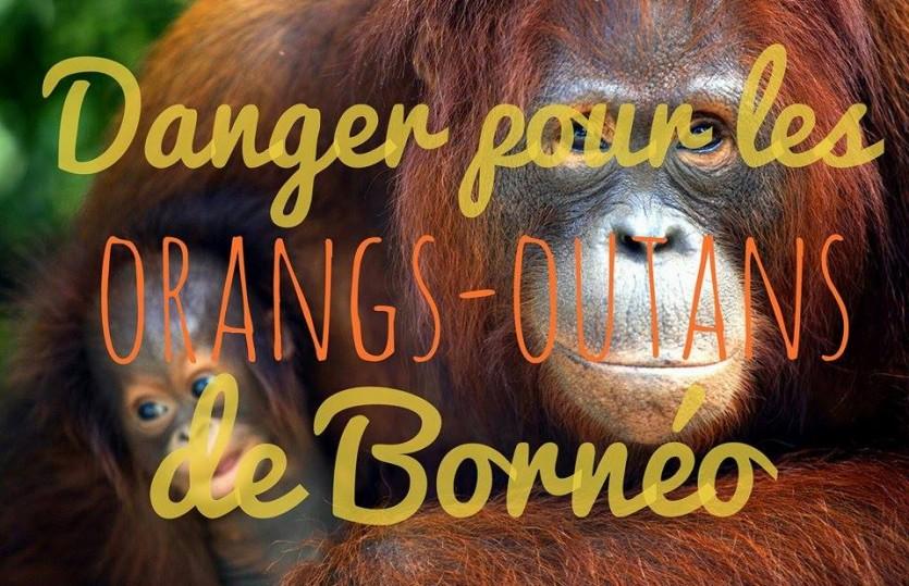 Où et pourquoi faire du bénévolat avec les orangs-outans