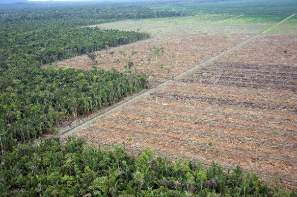 orang outan huile de palme
