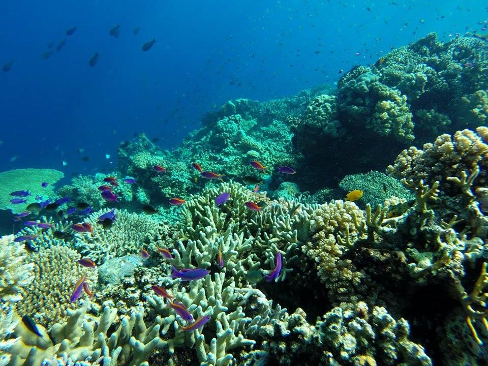 Quoi faire en Sulawesi-bunaken