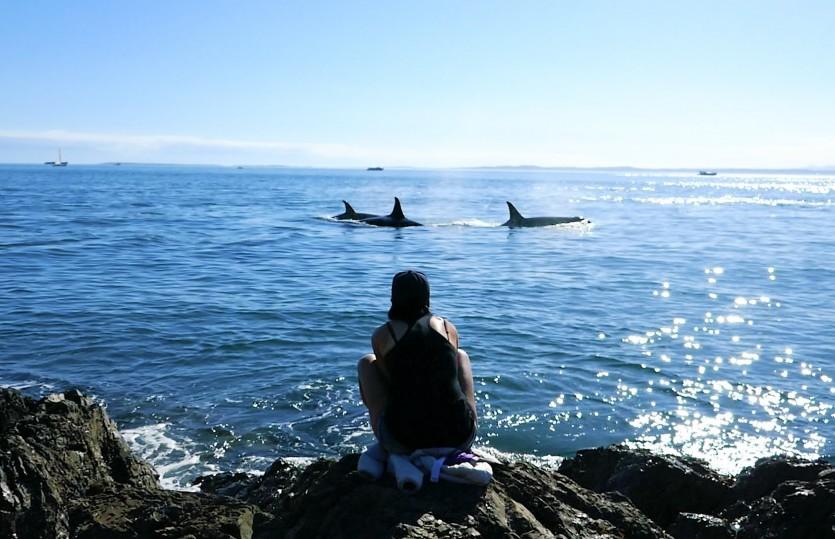 L'île de San Juan, le paradis des orques !